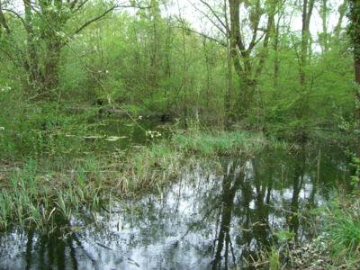 Zone humide - Cirque Naturel de l'Essonne