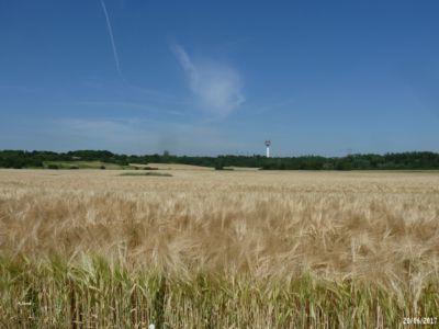 Champs d'orge 2017 - Cirque Naturel de l'Essonne