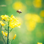 Abeille et biodiversité